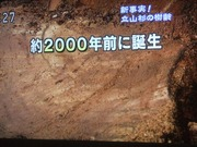 2010_0513071003tonai0025