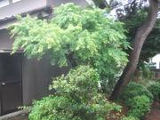2010_0524071003tonai0031