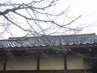 2011_0102071003tonai0041
