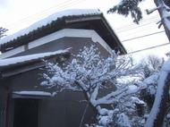 2011_0119071003tonai0061