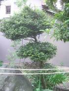 2011_0521071003tonai0030