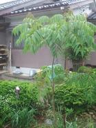 2011_0525071003tonai0036