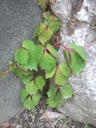 2011_0604071003tonai0022