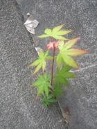 2011_0604071003tonai0025