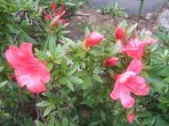 2011_0604071003tonai0036