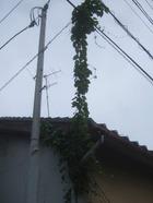 2011_0619071003tonai0068