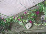 Gardencanal_005