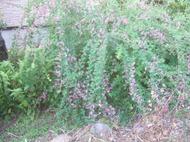 Gardencanal_012