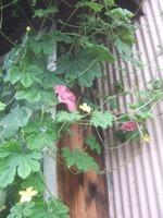 Garden_046