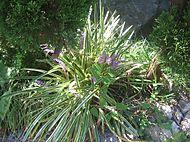 Gardencanal_013