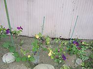 Gardencanal_018