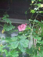 Gardencanal_039