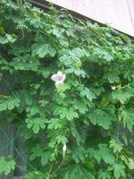 Gardencanal_041