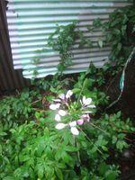 Gardencanal_043