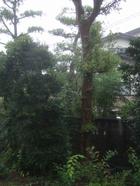 Rain_032