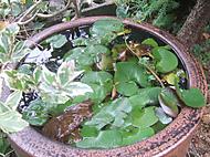 Garden2_010