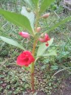 Garden2_017