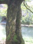 Treetrunk_028