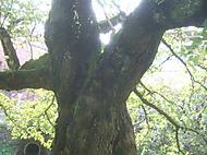 Treetrunk_030