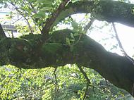 Treetrunk_033