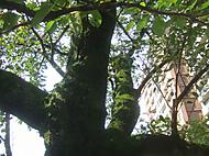 Treetrunk_036
