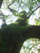 Treetrunk_039