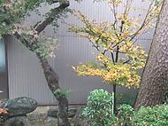 Katayama_011