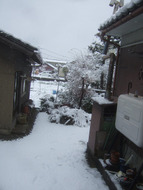 Snow_051