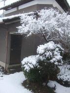 Snow_052