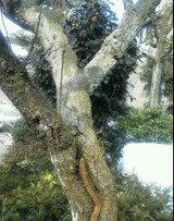 Img_20120301_0944111