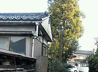 Img_20120412_1702121