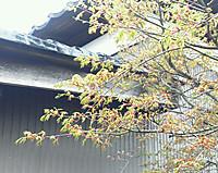 Img_20120417_1640391