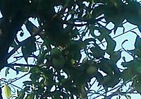 Img_20120506_1719521