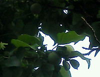 Img_20120521_0614121