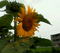 Img_20120705_16425421_2