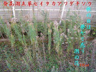 s-DSC01171