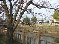 Tamaryu_029
