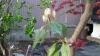 Plant_20210405201001